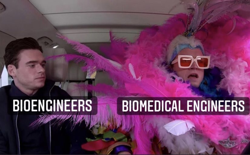 photo of a dull and drab man labeled bio engineers next to a flashy person in a pink boa get up and fabulous pink glasses labeled biomedical engineers